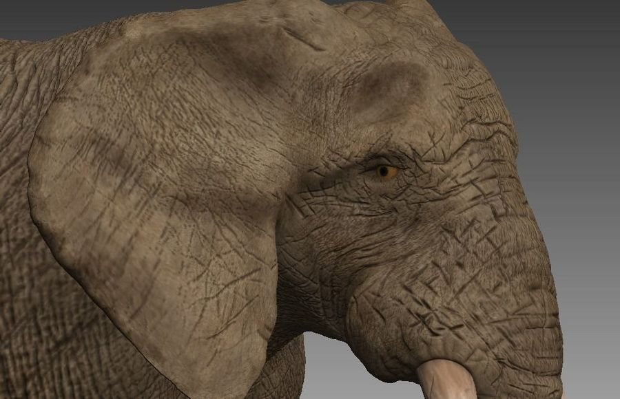 elefante marrone royalty-free 3d model - Preview no. 5