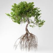 Mangroven Baum 3d model