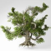 Alter Baum 3d model
