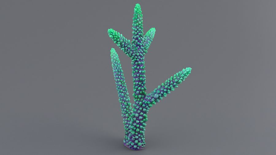 Koral Acropora royalty-free 3d model - Preview no. 3