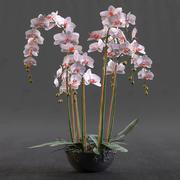 Orquídea 3d model
