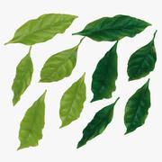 잎, 커피 잎. 신선하고 잘 익은 잎. 3d model