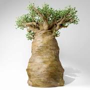 Madagaskar baobab ağacı 3d model