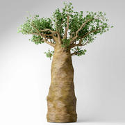 Madagaskar baobabı 3d model
