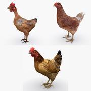 Colección de pollos modelo 3d