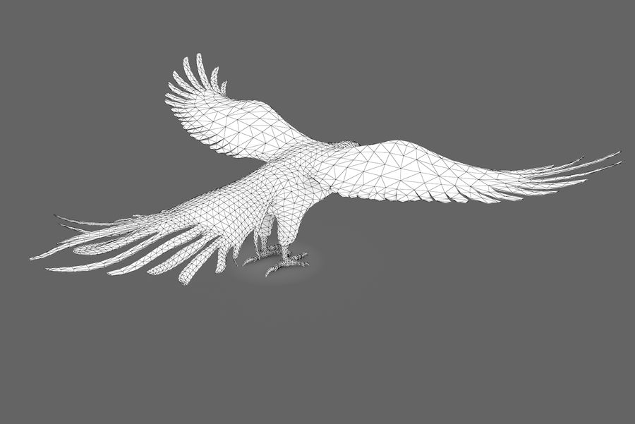 Bald eagle type 01 royalty-free 3d model - Preview no. 10