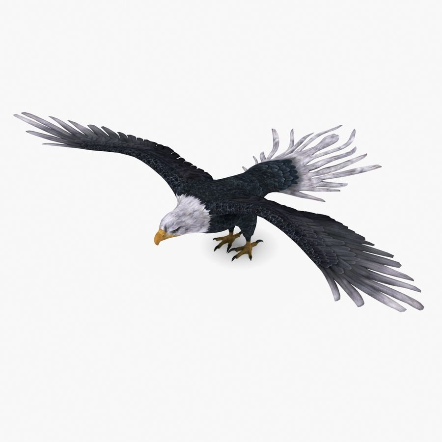 Bald eagle type 01 royalty-free 3d model - Preview no. 1