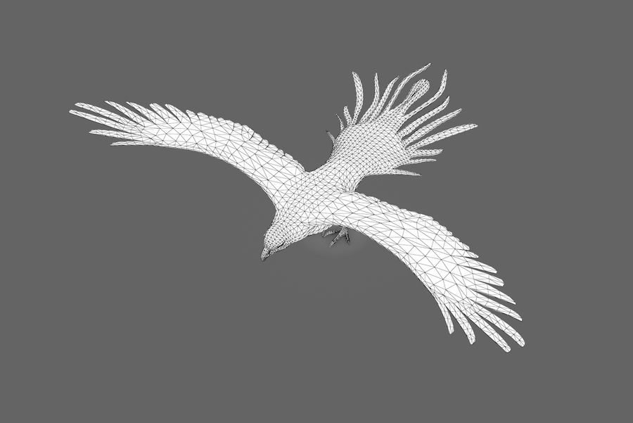 Bald eagle type 01 royalty-free 3d model - Preview no. 13