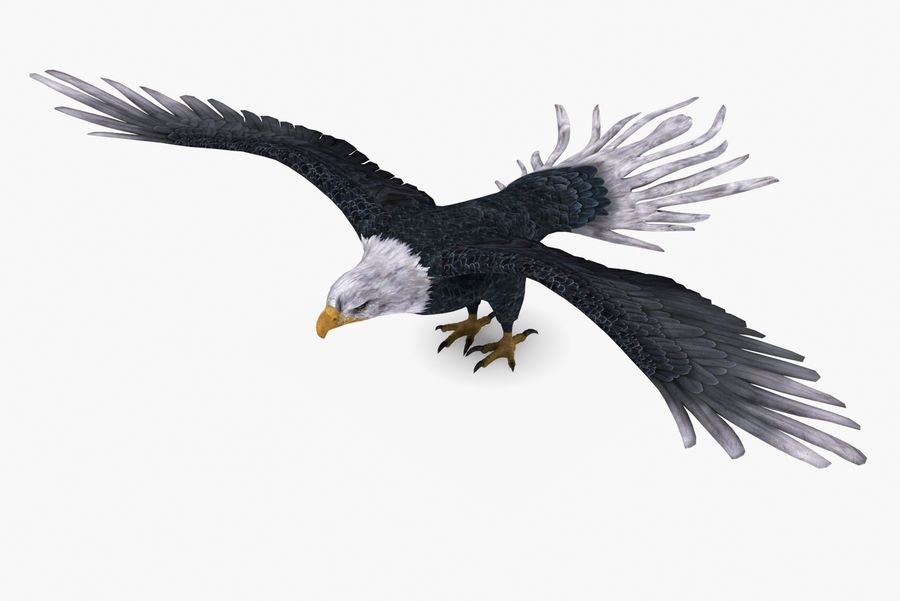 Bald eagle type 01 royalty-free 3d model - Preview no. 2