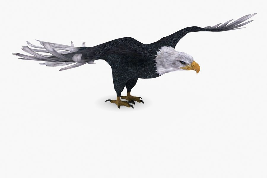 Bald eagle type 01 royalty-free 3d model - Preview no. 5
