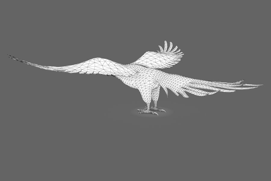 Bald eagle type 01 royalty-free 3d model - Preview no. 9
