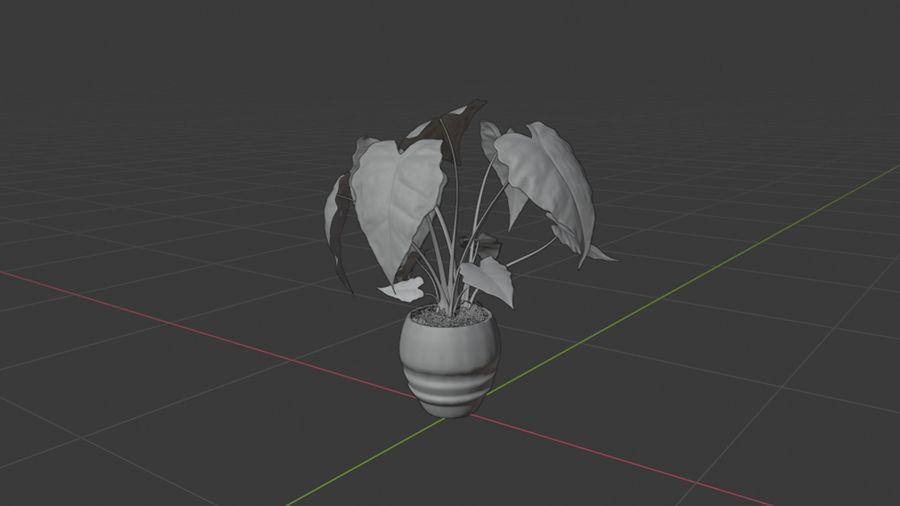 Alocasia Pot plant royalty-free 3d model - Preview no. 6
