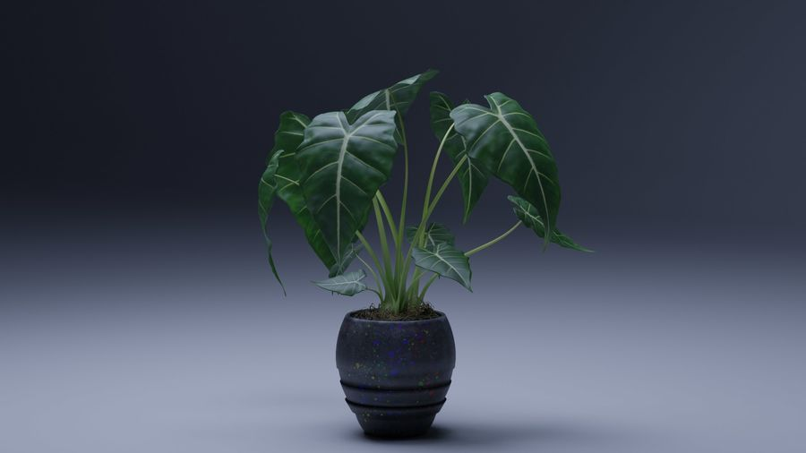 Alocasia Pot plant royalty-free 3d model - Preview no. 5