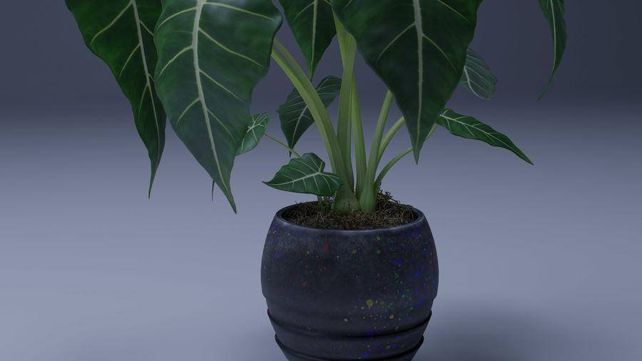 Alocasia Pot plant royalty-free 3d model - Preview no. 4