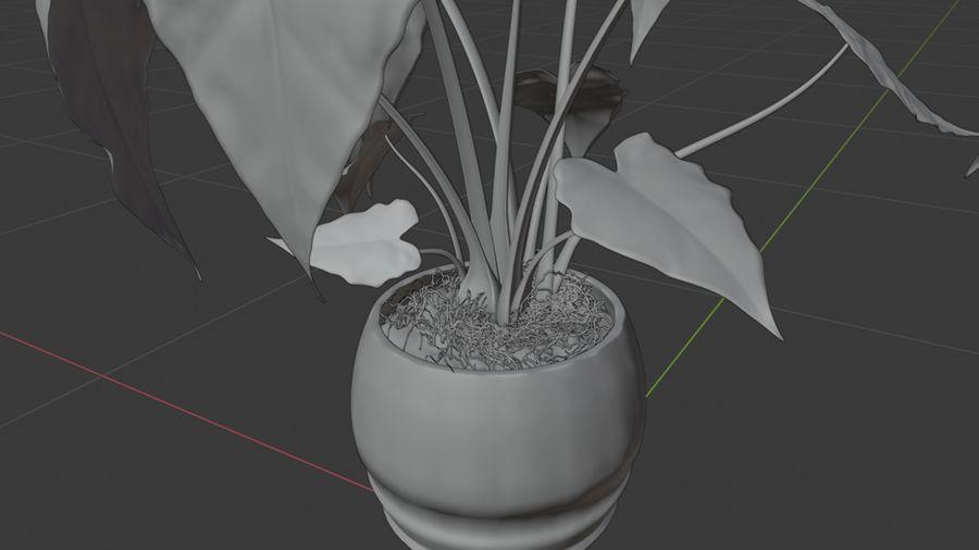 Alocasia Pot plant royalty-free 3d model - Preview no. 8