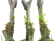 Old Jungle Tree 3d model