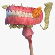人間の消化器系の解剖学 3d model