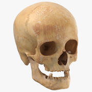 Human Female Skull With Jaw Damaged 01 3d model