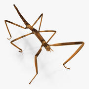 Stick Insect Brown 3d model