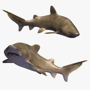 Kum kaplan köpek balığı 3d model