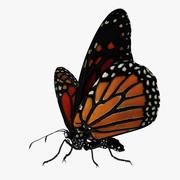 Piękny motyl olinowany i animowany 3d model