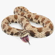 Brown Hognose Snake Attack Pose 3d model