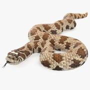 Pose enroulée de serpent brun Hognose 3d model