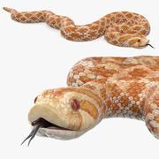 Coiled Hognose Snake 3d model