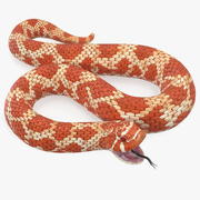 Red Hognose Snake Attack Pose 3d model