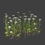 カモミールの花 3d model