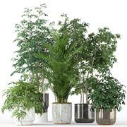 Plants collection 204 3d model