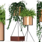 Collection de plantes 190 3d model