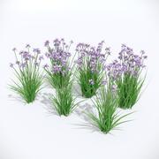 Iris sibirica迷人比利 3d model