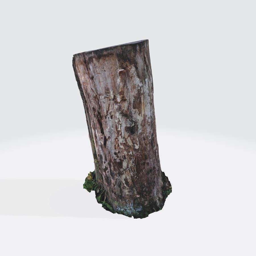 Treestump without bark royalty-free 3d model - Preview no. 3