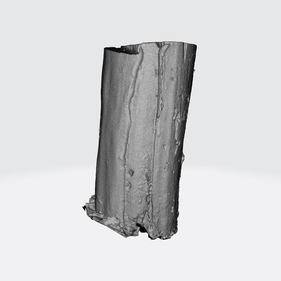 Treestump without bark royalty-free 3d model - Preview no. 13