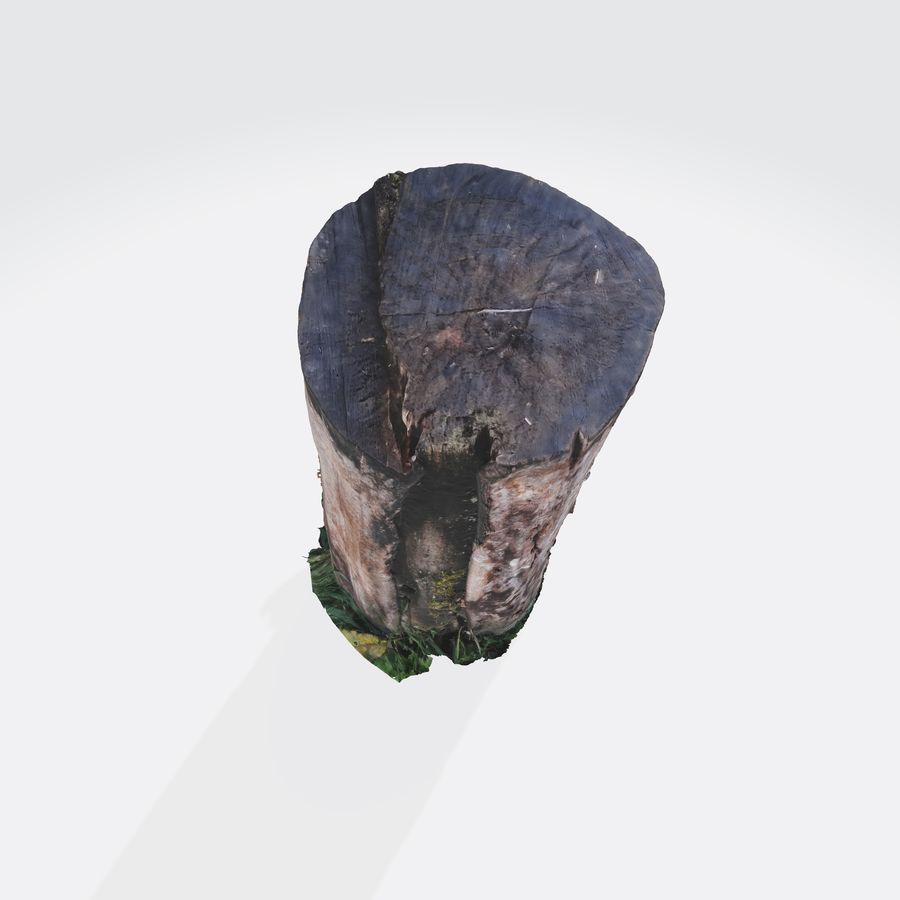 Treestump without bark royalty-free 3d model - Preview no. 10