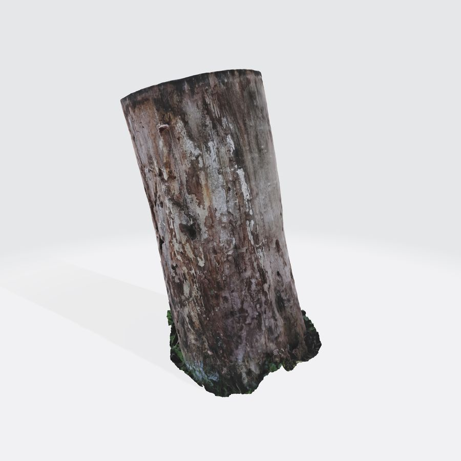 Treestump without bark royalty-free 3d model - Preview no. 4