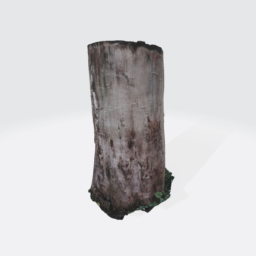 Treestump without bark royalty-free 3d model - Preview no. 6