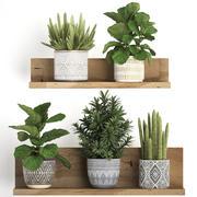 Collezione di piante esotiche 407 3d model