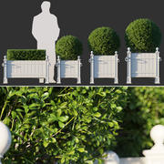 Boxwood In  Versailles Panel Planters 3d model
