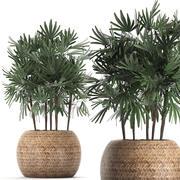Dekorative Palme in einem Topf 416 3d model