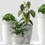 植物260 3d model