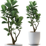 rośliny 259 3d model
