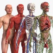 Anatomia e pelle maschile di tutto il corpo 3d model