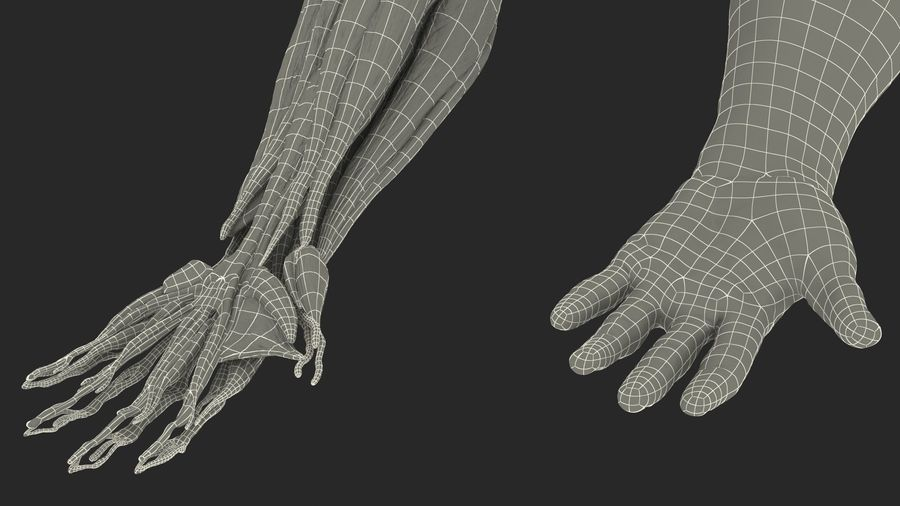 Male Arm Full Anatomy and Skin royalty-free 3d model - Preview no. 41