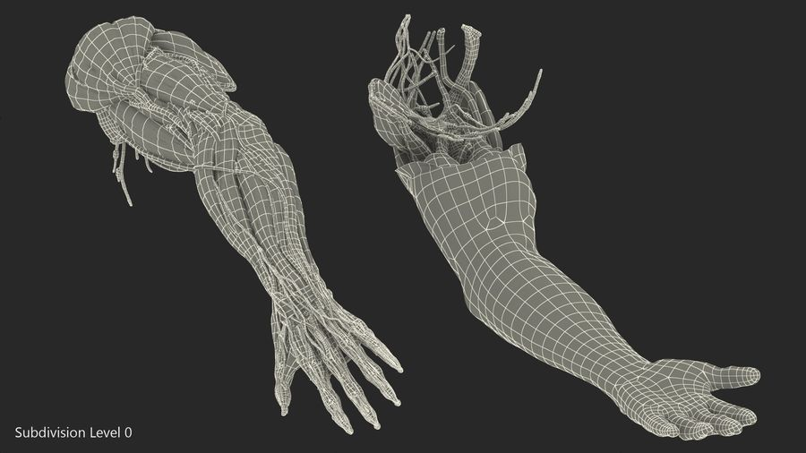 Male Arm Full Anatomy and Skin royalty-free 3d model - Preview no. 32