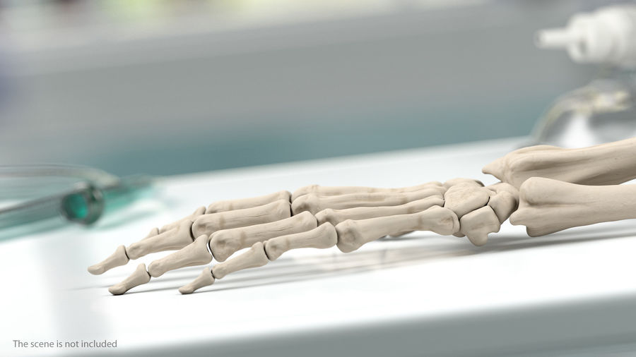 Male Arm Full Anatomy and Skin royalty-free 3d model - Preview no. 16