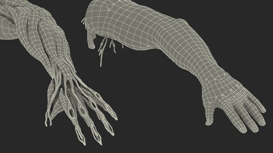 Male Arm Full Anatomy and Skin royalty-free 3d model - Preview no. 42