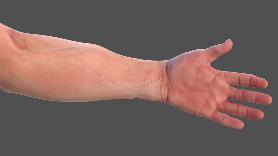 Male Arm Full Anatomy and Skin royalty-free 3d model - Preview no. 13