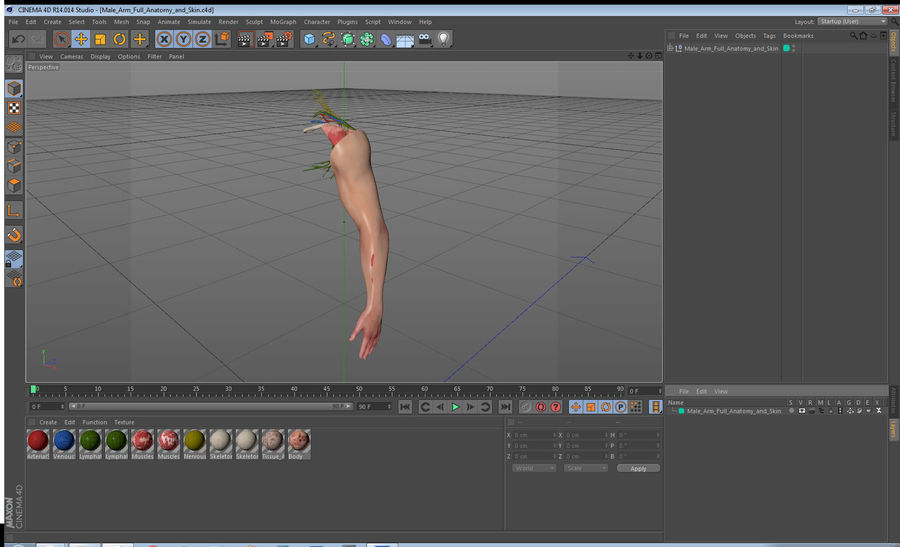 Male Arm Full Anatomy and Skin royalty-free 3d model - Preview no. 37